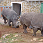 Wilde Tiere, Safari Zoo Mallorca