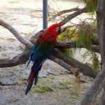 Papagei, Safari Zoo Mallorca