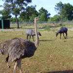 Wildnis, Safari Zoo Mallorca
