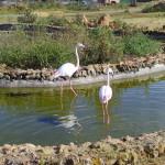 Traumhaft, Safari Zoo Mallorca