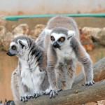 Süße Tiere, Safari Zoo Mallorca