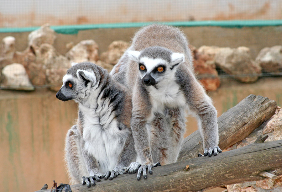 Safari Zoo nach Corona geöffnet