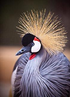 Exotische Tierwelt auf Mallorca